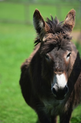 Kids' delight - all the animals at Hesketh Farm