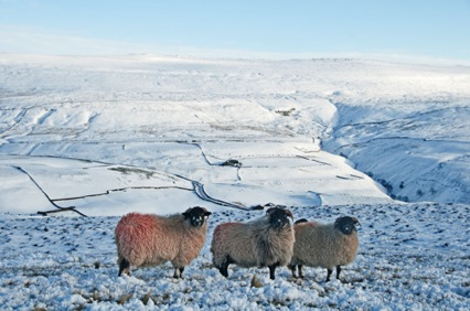Dales in winter